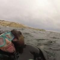 An adorable seal pup plays with snorkelers on Argentina's central Atlantic coast. But what happens next, the snorkeler never expected. Matt Sampson has the details.