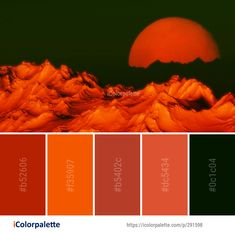 Color Palette Ideas from Orange Macro Photography Close Up Image