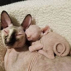 Mother's Day is Sunday May 13th, but humans aren't the only ones to honor the females who gave them life. Here are 15 pictures of mother cats and their brood snuggling, bathing, playing, and just plain being adorable.