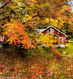 Perfect fall getaway in Maple Falls, Wash. James Bateman, Your Take Adventures By Disney, Fall Pictures, Small Houses, Event Management, Beautiful Scenery, Autumn Home, Just Amazing, Sheds, Travel Ideas