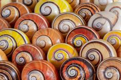 Spectacularly colored shells make these critically endangered Cuban snails highly sought after, but some are working to save them.