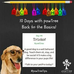 Even old dogs can learn new tricks! Sit. Stay. Be Social! #pawtreetips