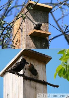 Rustic wood is a natural way to attract local birds to your birdhouse design Homemade Bird Houses, Homemade Bird Feeders, Bird Houses Diy, Bird House Plans, Bird House Kits, Contemporary Birdhouses, Building Bird Houses, Ceramic Roof Tiles, Birdhouse Designs