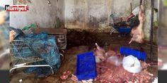 Yine o il yine kaçak domuz eti : Aydının Efeler Kuşadası Didim ve Söke ilçelerinde iş yerlerine yönelik domuz eti denetimi gerçekleştirildi.  http://ift.tt/2eeXIsb #Türkiye   #domuz #yerlerine #ilçelerinde #yönelik #Söke