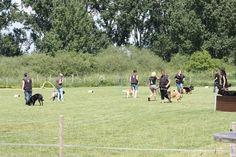 Hundetraining Gruppenarbeit Alltag