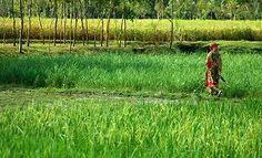 bangladesh - Google Search