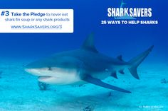 Ways to Help Sharks #3 Take the pledge to never eat shark fin soup or any shark products! https://www.sharksavers.org/en/our-programs/i-m-finished-with-fins/get-active/take-the-pledge/