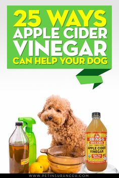 Apple Cider Vinegar Dog Treatments Apple cider vinegar, or ACV, is by no means new. In fact, people have been. Apple Cider Vinegar Dogs, Apple Cider Vinegar Benefits, Dog Health Tips, Dog Health Care, Dog Care Tips, Pet Care, Pet Tips, Flea Remedies, Itchy Dog Remedies