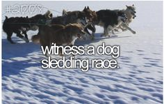 Specifically I would like to witness the beginning of the Iditarod