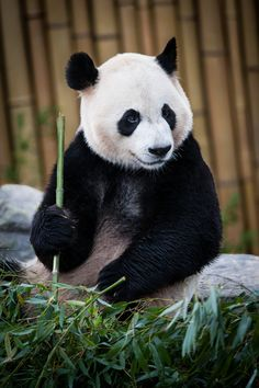 """500px / Foto """"Festa de bambu"""", de Justin Lo"""