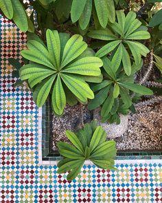 Plant Leaves, Succulents, Plants, Succulent Plants, Flora, Plant