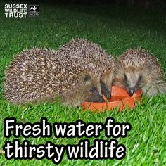 Top three tips for helping thirsty wildlife