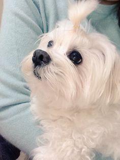 my companion dog Ben