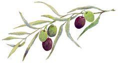 <b>Olive Branch | Art</b> | Pinterest