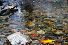 Goldstream National Park - Victoria, B.C.- Photo by Kim Hoeft