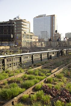 the High Line Park in NYC, such a pretty and creative way to preserve some of NY's history :)