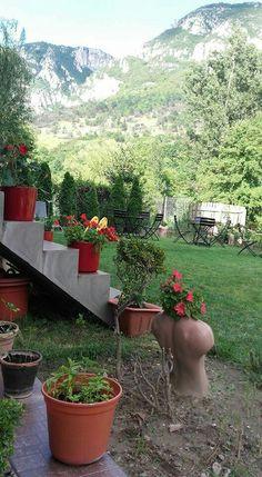Sun Reno Garden Sun, Garden, Plants, Garten, Lawn And Garden, Gardens, Plant, Gardening, Outdoor