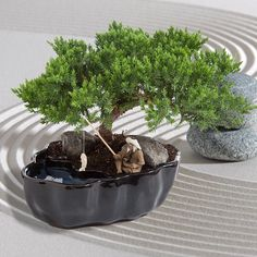 Image from http://cdn.givingplants.com/media/catalog/product/cache/6/image/9df78eab33525d08d6e5fb8d27136e95/b/o/bonsai-zen-reflections-white-030_1.jpg.