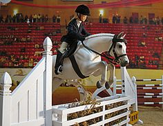 """This is """"Ever so Clever,"""" showing in a hunters class. Original finish Breyer """"Newsworthy."""""""