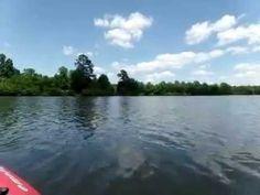 kayaking trip to Lake Orange, VA.