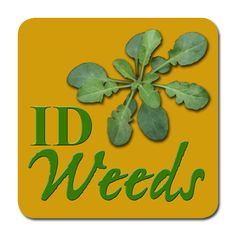 Weed ID Guide, MU Weed Science Program - awesome step-by-step to id weeds, great pictures as well