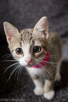 Ojitos lindos (Pets Photography)