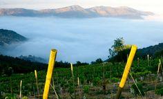 Chile es uno de los mayores productores de vino del mundo, cuyo éxito como exportador se ha basado en hacer Cabernet Sauvignon y Chardonnay a buen precio, con un estilo comercial,