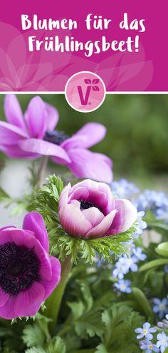 Ob Narzissen, Krokusse, Lenz-Anemonen, Hornveilchen, Lenz-Sternchen oder Tulpen - im Frühling kann man sich vor blühfreudigen Blumen kaum retten! Wie man tolle Kombination erstellen kann & welche Blumen auf keinem Fall im Garten fehlen dürfen, erfahrt Ihr hier...Weiterlesen... Pictures, Daffodils, Balcony Plants, White Anemone, Planting Flowers, Nature Photography