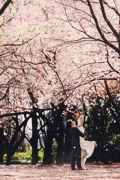 桜の見ごろは、実は満開よりも散り始めの頃かもしれません。舞い散る桜と、ピンクのカーペットの競演は、はこれ以上ないほどの自然の演出。  photo by Masato Kubo / kuppography  http://www.kuppography.com