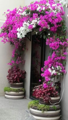 Beautiful Flowers Garden, Pretty Flowers, Beautiful Gardens, Landscaping Plants, Outdoor Landscaping, Flower Shop Decor, Front Yard Flowers, Exotic Plants, Tropical Garden
