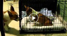 Cão Ajuda o Seu Amigo a Fugir Da Jaula http://www.funco.biz/cao-ajuda-amigo-fugir-da-jaula/