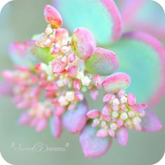 Pastel flower close