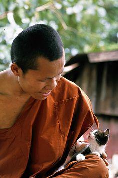 Le chaton et le moine Thaïlandais