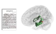 For the first time the hippocampus —- a brain structure crucial for creating long-lasting memories —- has been observed to be active in response to recurring musical phrases while listening to music. Thus, the hippocampal involvement in long-term memory may be less specific than previously thought, indicating that short and long-term memory processes may depend on each other after all.