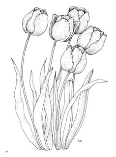 Printable Beautiful Tulip Coloring Pages - Free Coloring Sheets Flower Coloring Pages, Coloring Book Pages, Painting Patterns, Fabric Painting, Free Printable Coloring Pages, Free Coloring, Flower Art, Flower Colors, Line Art