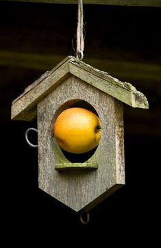A bird feeder hanging at Allt-y-bela, home of garden designer Arne Maynard Photo: Britt Willoughby Dyer Homemade Bird Houses, Homemade Bird Feeders, Bird Houses Diy, Wood Bird Feeder, Bird House Feeder, Unique Bird Feeders, Bird House Plans, Bird Boxes, Backyard Birds