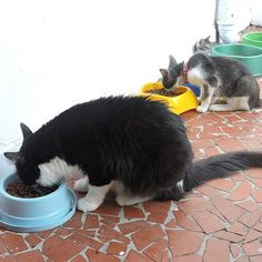 """""""Pausa pra hora mais gostosa do dia: Hora do Rango!"""" nhom! nhom!  #almosache #horadorango --------------------------------------------------- www.catland.org.br www.catlandlojinha.com.br  catlandrescue@gmail.com --------------------------------------------------- #catland #gocatland #catlandrescue #instacats #catlovers #catsofinstagram #catoftheday #ilovecats #adote #adotenãocompre"""