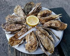 Austern in Cancale – Oysters in Cancale – creatologyblog