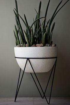Lança-de-são-jorge em vaso suspenso