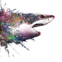 image conscious - V595D Shark by VeeBee