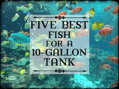 Best Fish for a 10-Gallon Tank Setup