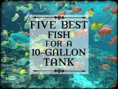 Best Fish for a 10-Gallon Tank Setup