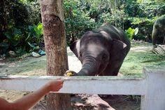 Где покормить слоников на Самуи http://loveinmonte.ru/namuang-1.html