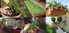 Cosa c'è di meglio che cucinare con ortaggi e verdure 100% bio del proprio orto? Anche chi vive in città può farlo... #biologico #orto