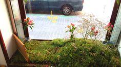 Escaparate con nuestro #jardín #garden  efímero