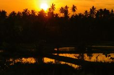 Sunset over a resting rice field in Ubud, Bali, Indonesia. Imaged tweeted by Bali Ultimate @BaliUltimate