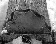 turn of the century logging oregon - Google Search