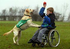 """""""O Grito do Bicho"""": Cães de assistência ajudam crianças autistas e def..."""
