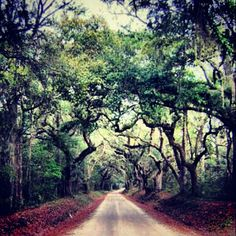 Edisto Beach State Park Trail (South Carolina)--this is what I remember of SC as a kid.