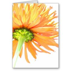 Gorgeous, artsy greeting cards!  Dahlia Burst ~ Minnesota, USA